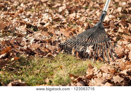 Cleaning With Rake Of Autumn Leaves In Park