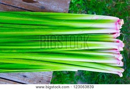Abstract background from the rhizomes and stems Acorus calamus