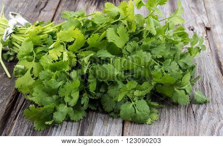 fresh coriander or cilantro bouquet on old wood table