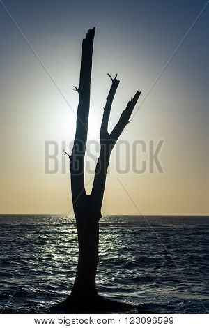 A silouette of a tree with ocean in the background