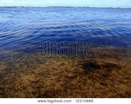 Algae, blue sea, and sand