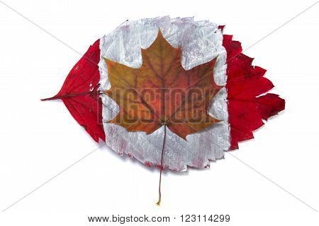 Flag Of Canada On Autumn Leaves