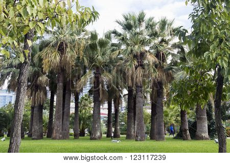 Palm Trees In Park