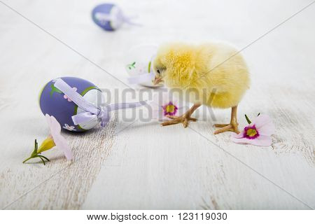 Yellow Chicken And Easter Eggs
