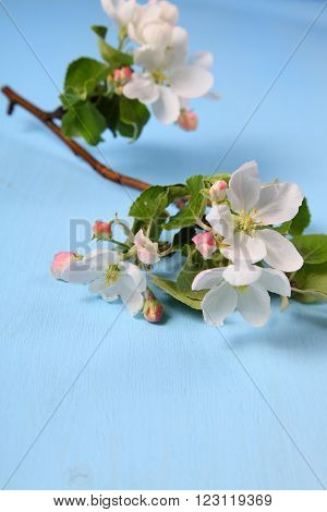 Flowers Of Apple On A Wooden Background