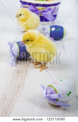 Yellow Chickens And Easter Eggs