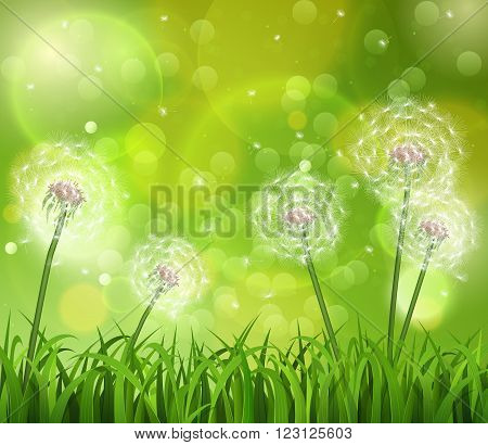Dandelions in the grass on a green background. Vector illustration.