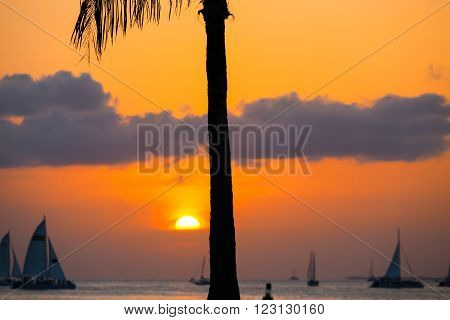 KEY WEST, USA - MAY 10, 2015: Sunset above the Key West Bight on a glowing orange sky with some clouds and several sailing ships on the sea. The sun is already halfway down in front the silhouette of a palm tree.