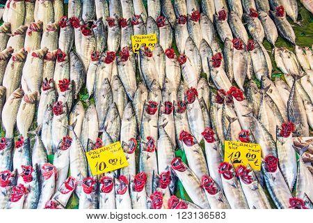 Plenty of fish at a fish market in Istanbul, Turkey