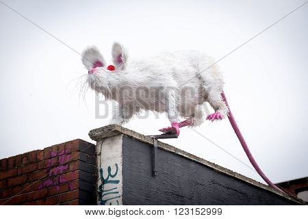 LIVERPOOL, UK: MARCH 21st 2016: A super sized rat sculpture sits aloft a building in the Baltic Triangle district of Liverpool