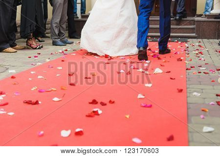 Red carpet arrival for a happy young bride and groom. Couple go on the red carpet, rose petals on the carpet. View from the back. Guests are greeted newlyweds.
