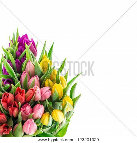 Bouquet of resh spring tulip flowers isolated on white background