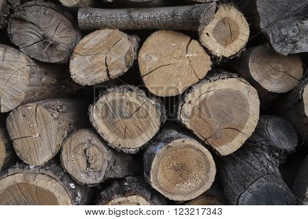 wood logs in the woodshed as nature background
