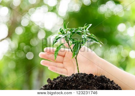 Hand And Seedling