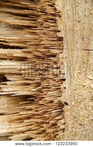 abstract detail showing a piece of slivered wood