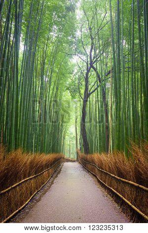 Path to bamboo forest, Arashiyama, Kyoto, Japan