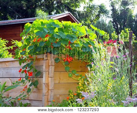 View of a raised bed with lush growth