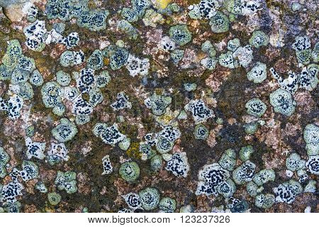 Closeup of Colorful Spots of Lichen on Rock