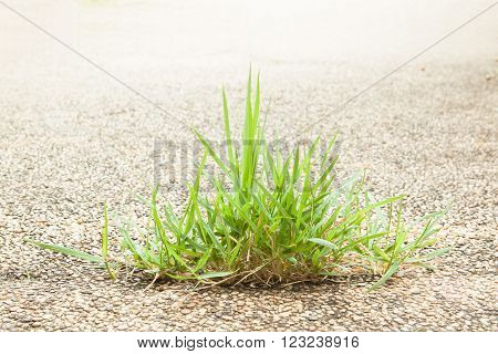 Wrong idea from clump of grass on gravel floor