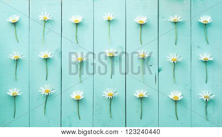 Summer Floral pattern with chamomile flower over blue-green vintage wooden background.