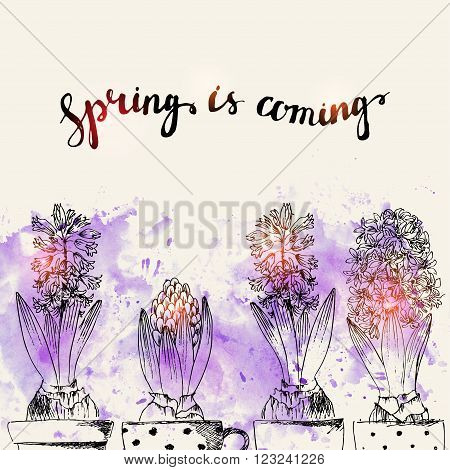 Hand drawn line art pot hyacinth flowers and bud. Spring is coming lettering on purple watercolor splash. Spring hyacinth ink drawing for easter card spring backgrounds floral design.