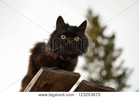 Black Cat sitting on the roof of unplaned boards