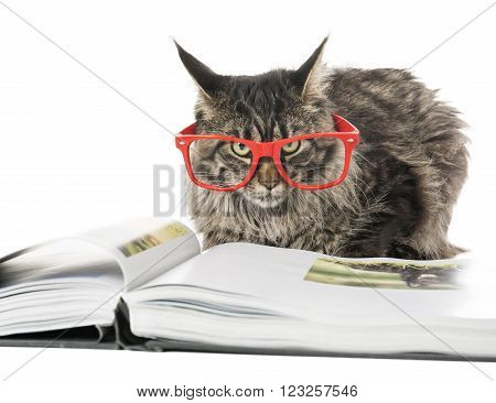 Cat in the glasses on a white background