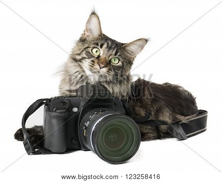 Cat with a camera on a white background