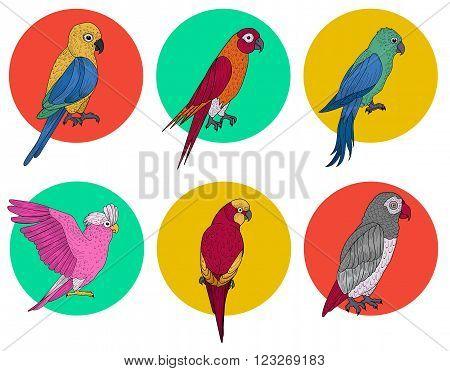 Exotic Parrot. Tropical Bird. Various Parrots. Different Birds. Set of Birds. Hand Drawn. Vector illustration