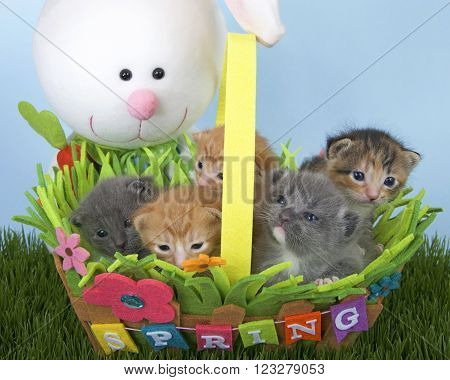 Five kittens in a spring flower basket with stuffed Easter Bunny looking at them from behind.
