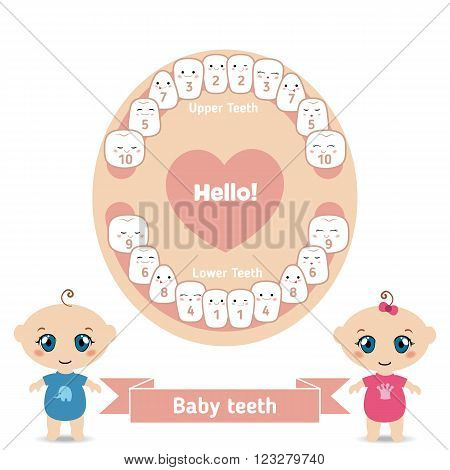 Temporary teeth - names groups period of eruption and shedding of the children. Baby teething infographic. Jaw with teeth, baby boy and baby girl on a white background.