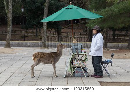 Nara, Japan - December 28, 2014: Tame deer waiting for a snack from the selling lady in Nara Park next to Todai-Ji temple.