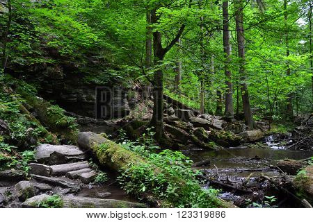 Rivulet between rocks in a peaceful forest