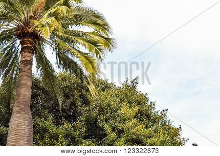 Palm trees at Beverly Gardens Park. Vintage post processed. Fashion, travel, summer, vacation and tropical beach concept.