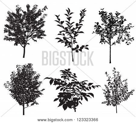 Collection of silhouettes of garden trees. Vector.