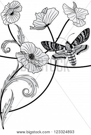 vector background with death's head hawk moth (Acherontia atropos) and flowers of poppy
