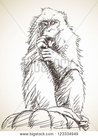 Sketch of monkey gnawing a stick, Hand drawn illustration