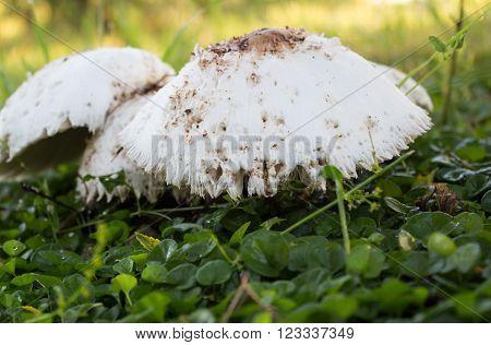 Photo of cute bedraggled mushroom on grass
