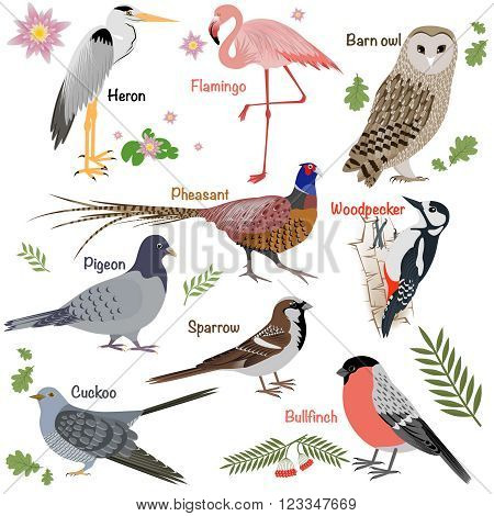 Realistic birds collection. Barn Owl and Heron, Bullfinch and Pheasant, Woodpecker andFlamingo. Vector illustration