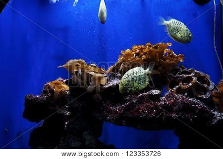 Monaco, Monaco - May 21: There's a view one of the aquariums with a coral riff in Monaco's Museum of Oceanography May 21, 2015 in Monaco, Monaco.