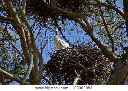 spatulas in their nests aviaries nature doñana