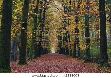 Forrest path