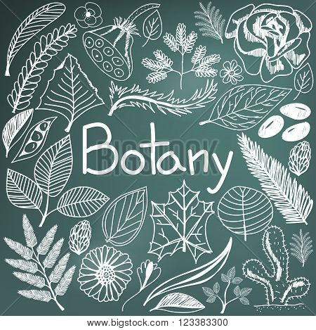 Botany biology doodle handwriting icons plants and trees in blackboard background for science education presentation or subject title create by vector