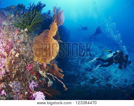 diver with giant fan coral in Similan Thailand