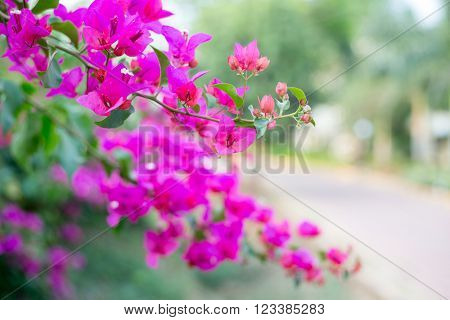 Pink flowers background - Shallow focus depth