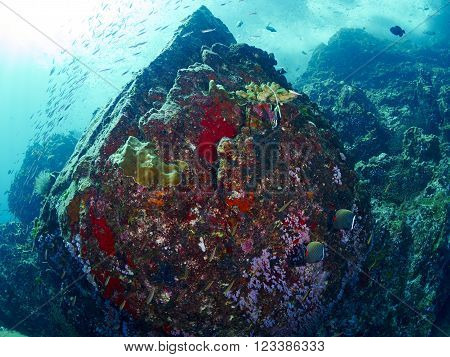 Colourful coral reef with glassfish swarm in similan Thailand.