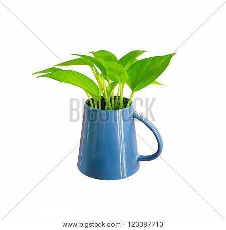 Plant on white isolated background with clipping path.