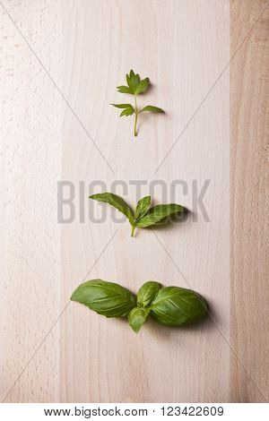 Leaves of lovage mint and basil on wooden background