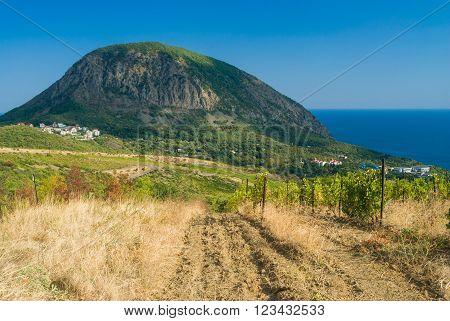 View from nearest vineyards on a Bear (Ayu-Dag) mountain near Gurzuf resort in Crimean peninsula