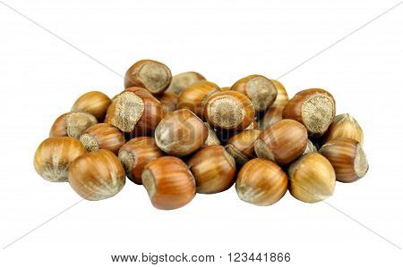 Hazelnuts also called cob or filbert nuts.
